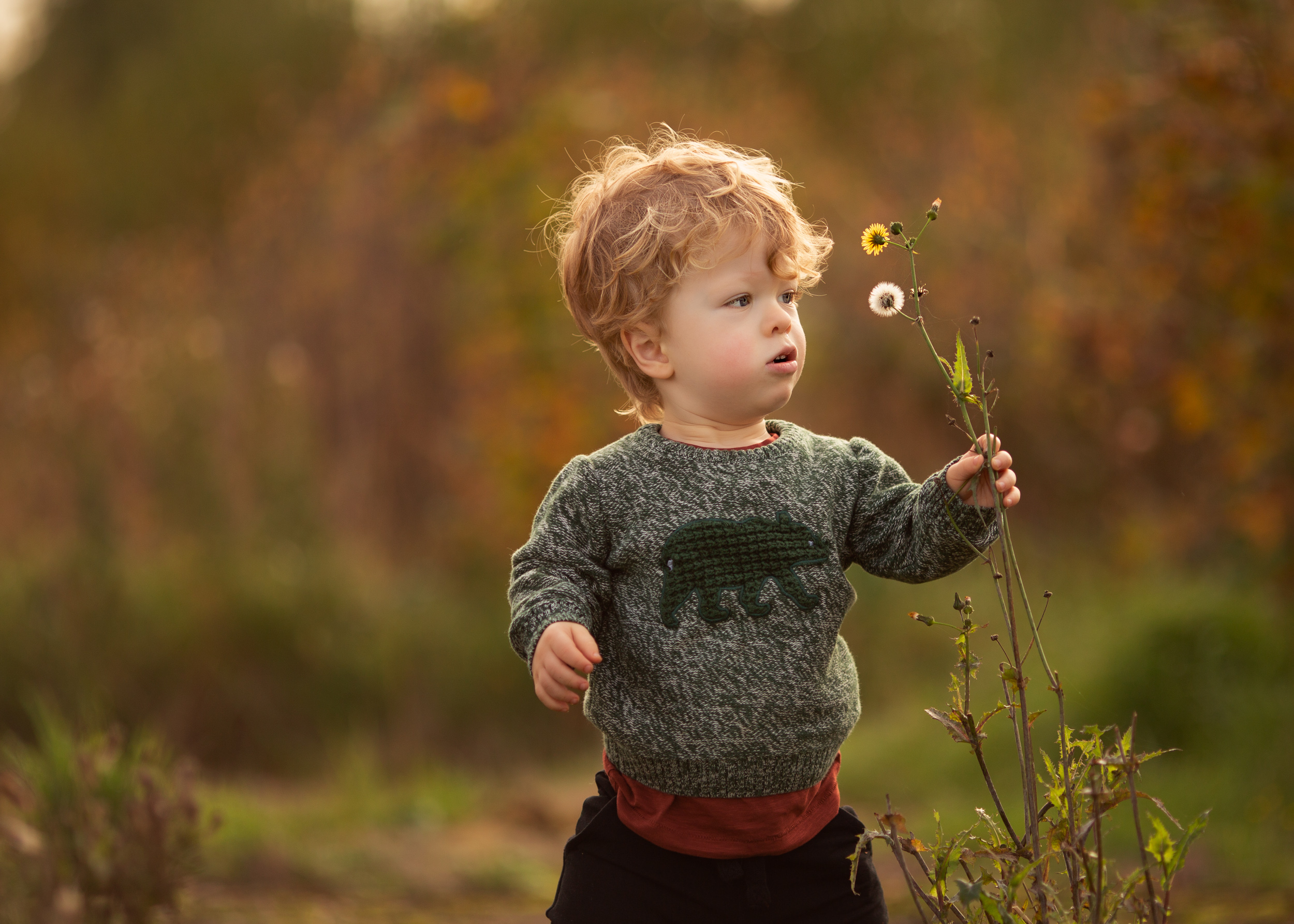 Rufus picking flowers during an outdoor family portrait session in Nantwich, Cheshire