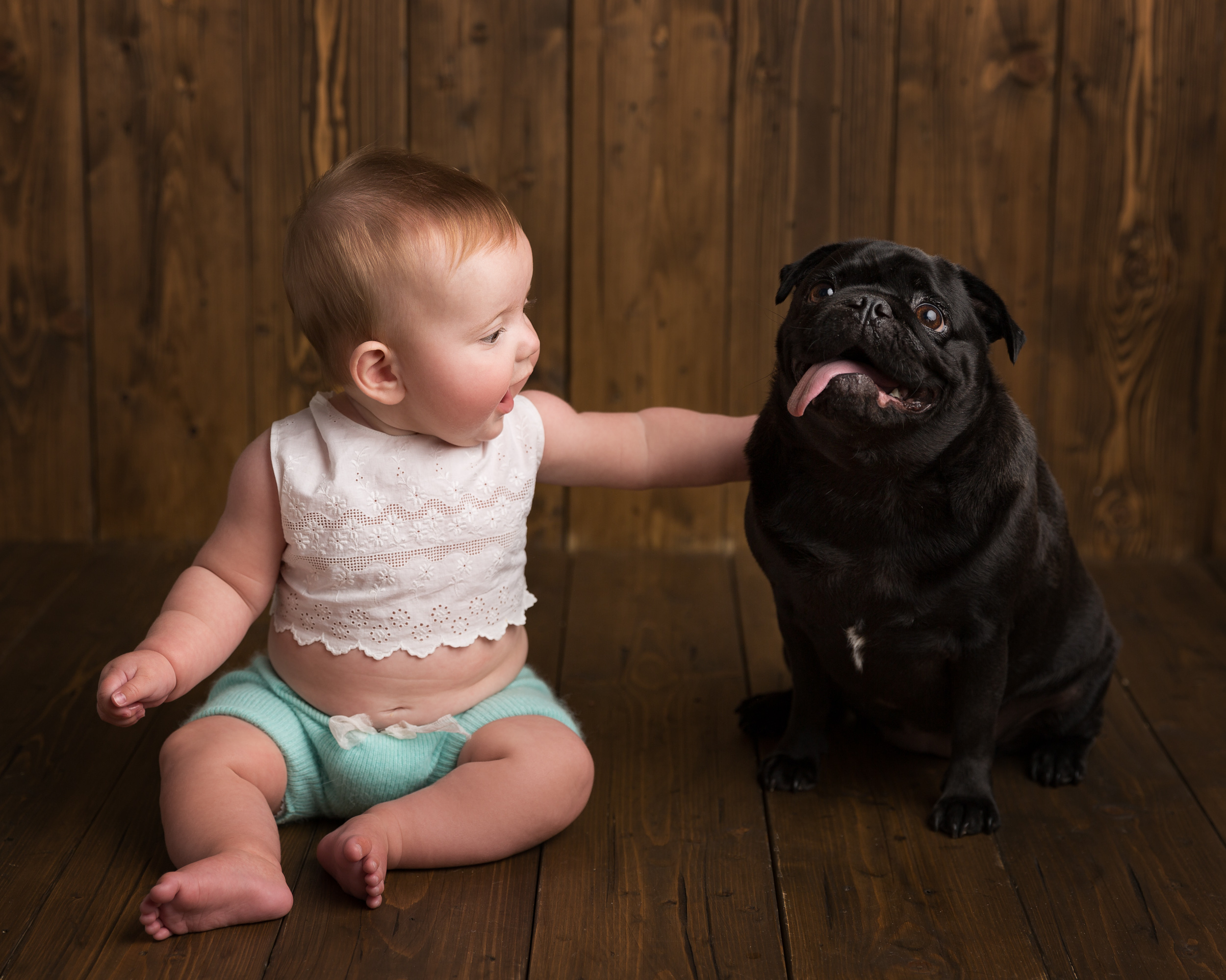 6 month baby girl with her pet pug taken during a milestone portrait session in Sandbach, Cheshire