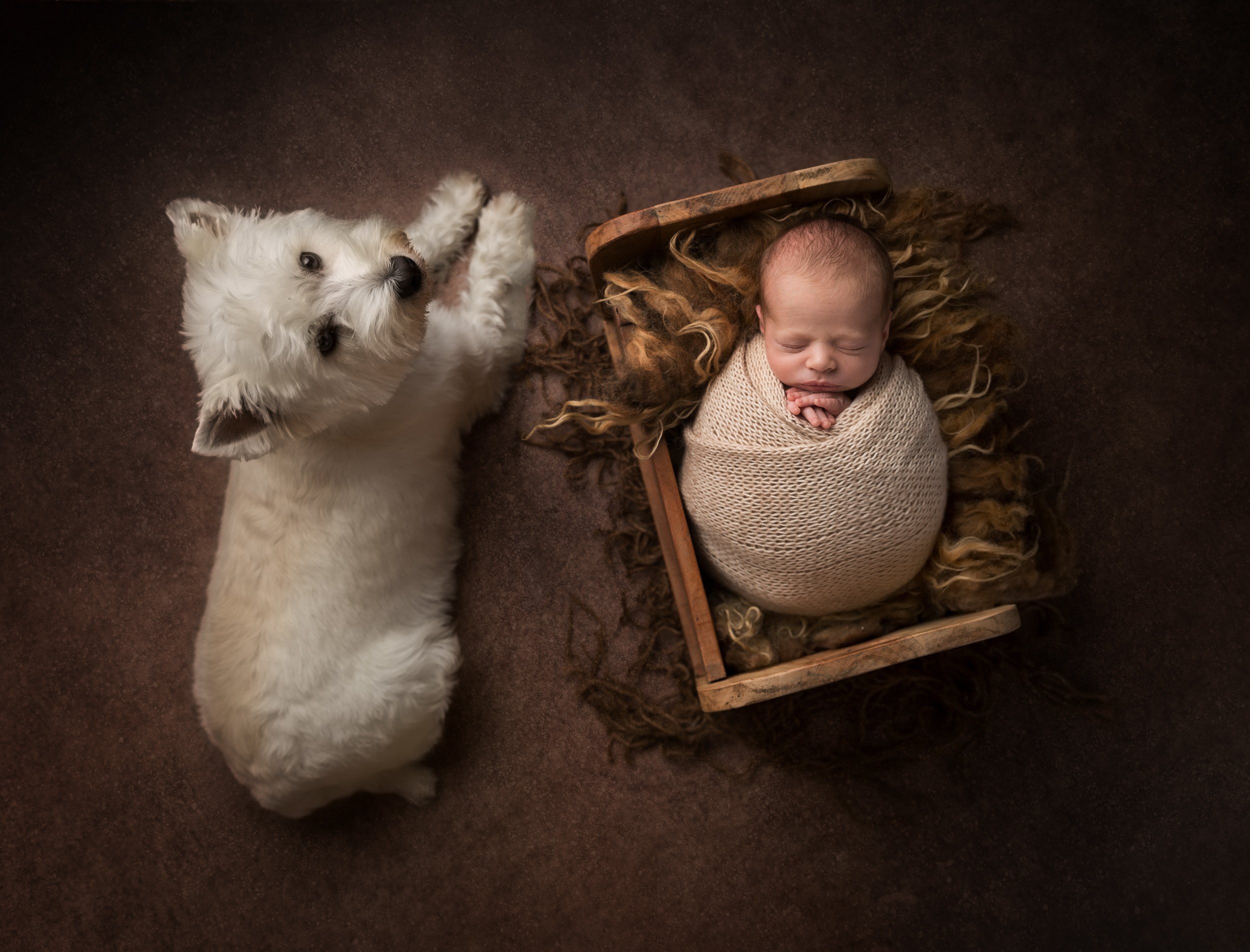 A newborn in a little bed next to his pet dog by Cheshire newborn photographer in Sandbach