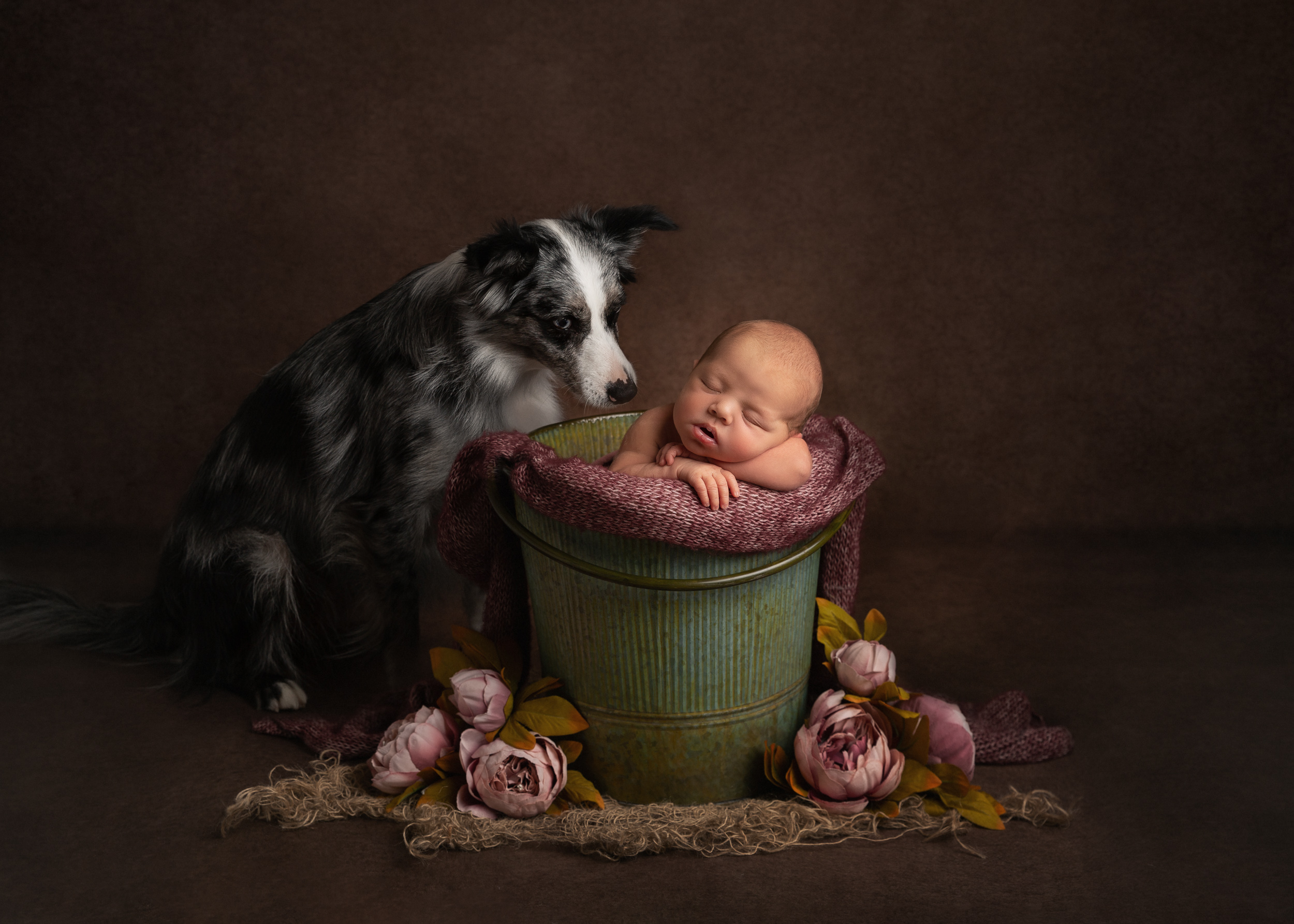 Newborn posed in a bucket with a dog overlooking by Cheshire newborn photographer in Sandbach